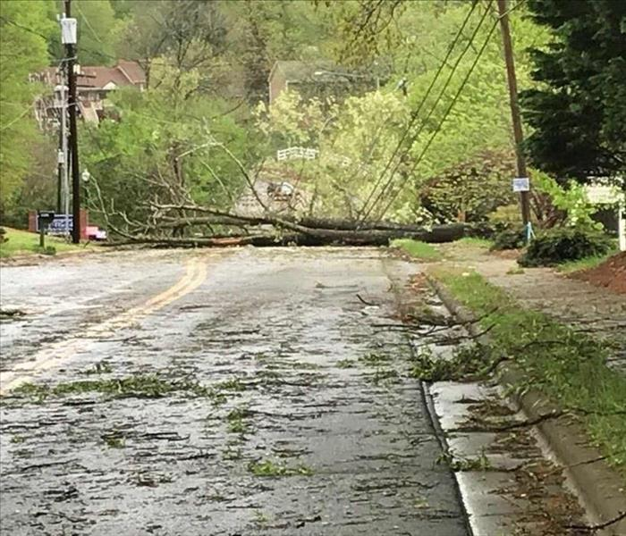 Fallen Trees across Roads and Power Lines