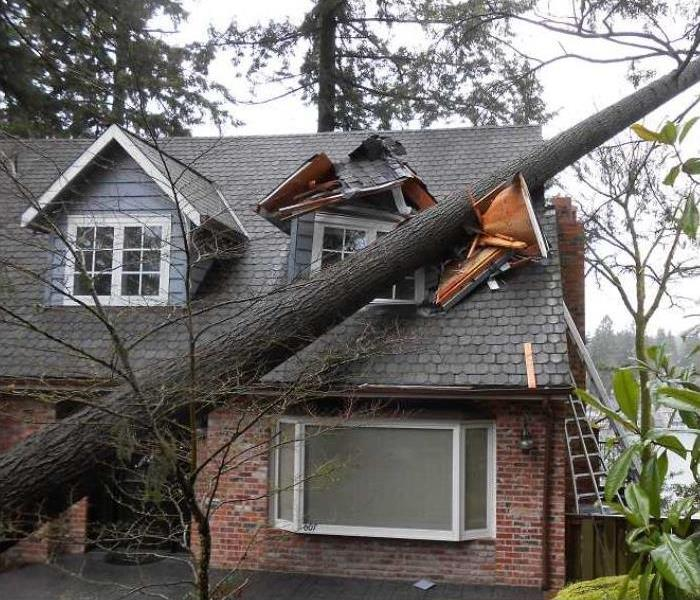 house with fallen tree damage. broken roof.