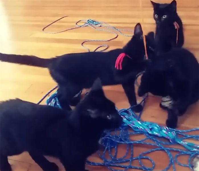 4 Black kittens playing with string